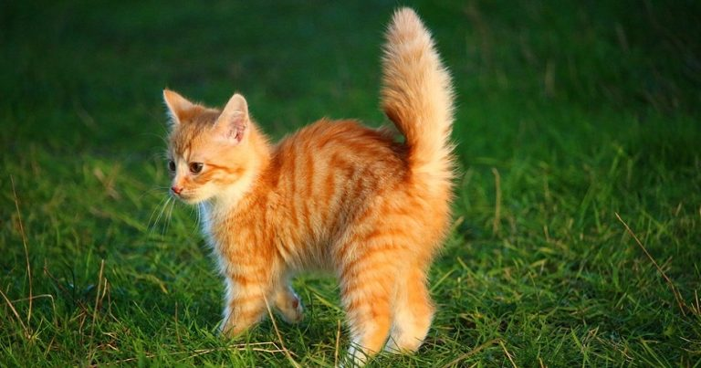 "Austrian man jailed after circulating Nazi propaganda, uploading image of ""Heil Hitler"" cat"